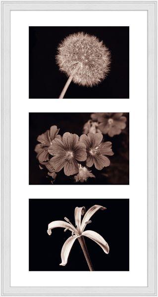 Galerierahmen G320 25 x 50 Normalglas inkl. Passepartout weiß - 3 Ausschnitte 13 x 18 quer