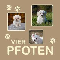 Haustier_VierPfoten_040-040.jpg
