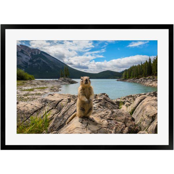 Streifenhörnchen am Bergsee | Poster mit Holzrahmen 50x70 cm