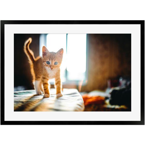 Rotes Kätzchen | Poster mit Holzrahmen 50x70 cm