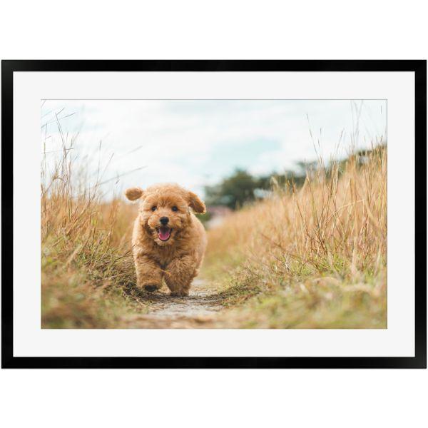 Knuffiger Hund in Bewegung   Poster mit Holzrahmen 50x70 cm