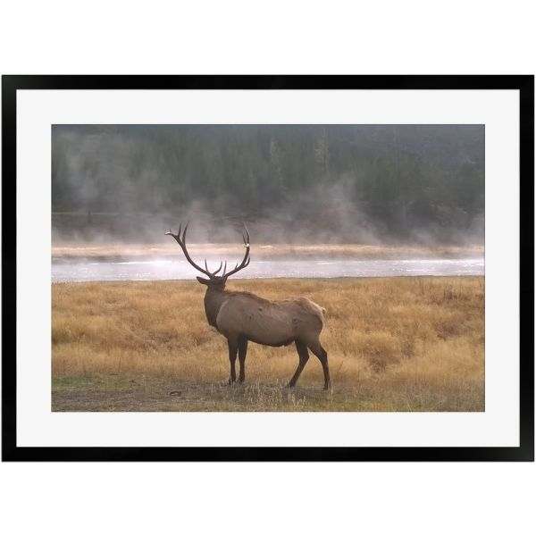 Majestätischer Elch | Poster mit Holzrahmen 50x70 cm